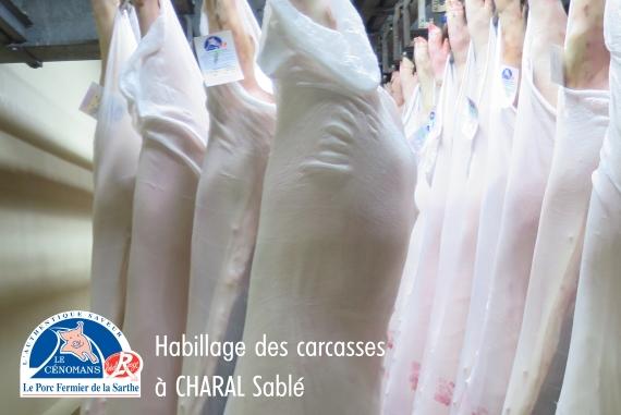 Les carcasses de Porc Fermier Cénomans Label Rouge livrées par Charal Sablé sont protégées par une stockinette pour le transport.